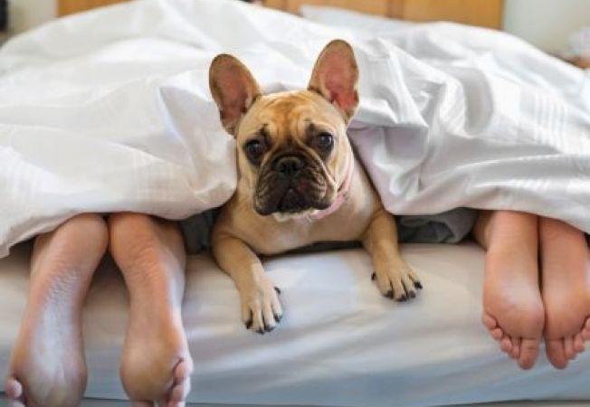 652x450_111621-4-motive-pentru-a-renunta-sa-mai-dormi-cu-cainele-in-pat
